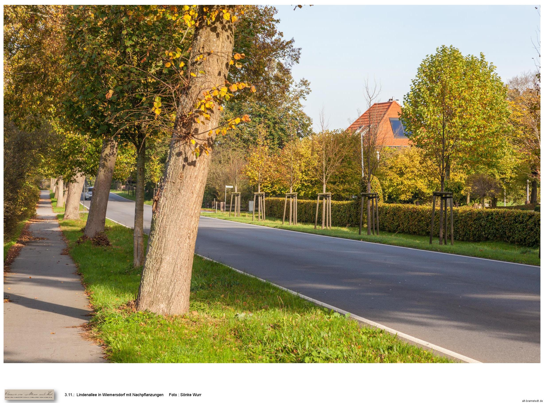 3-11-lindenalleemitnachpflanzung-wiemersdorf