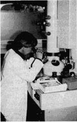 Untersuchungsarbeiten in der Rheumaforschung